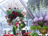 Weddings - Decorations (click to enlarge)